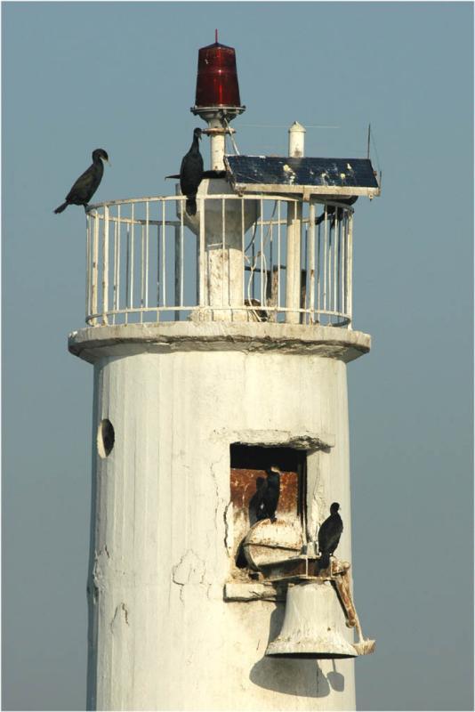 Cormorants on lighthouse