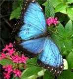 butterfly_world