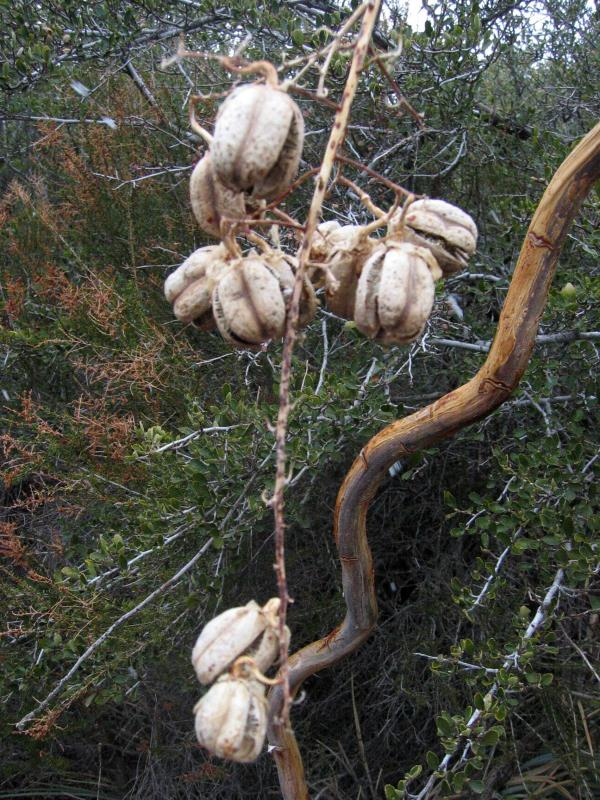 Some kind of pods