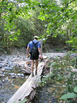 Charlie crossing the log at Mineral Creek