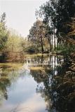 בובלק - נוף בירקון