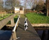 Joop's Dog Log - Wednesday Feb 04 (1)