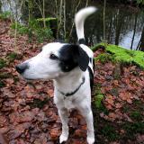 Joop's Dog Log - Tuesday Feb 10