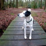 Joop's Dog Log - Wednesday Feb 11