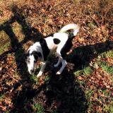 Joop's Dog Log - Wednesday Feb 03