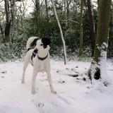 Joop's Dog Log - Monday Feb 01
