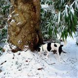 Joop's Dog Log - Saturday Jan 31