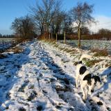 Joop's Dog Log - Friday Jan 30