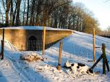 Joop's Dog Log - Thursday Jan 29 (1)