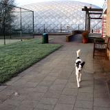 Joop's Dog Log - Tuesday Jan 27