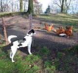 Joop's Dog Log - Thursday Jan 22