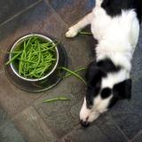 Joop's Dog Log - Sunday Feb 15