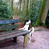 Joop's Dog Log - Monday Feb 16