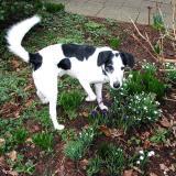 Joop's Dog Log - Tuesday Feb 17