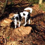 Joop's Dog Log - Friday Jan 16