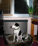Joop's Dog Log - Wednesday Jan 14