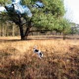 Joop's Dog Log - Monday Jan 12