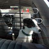 Joop's Dog Log - Wednesday Feb 25