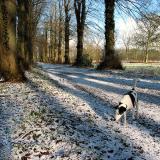 Joop's Dog Log - Thursday Feb 26