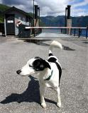 Joop's Dog Log - Saturday August 14