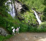 Joop's Dog Log - Monday August 16