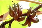 bananas   sort of.jpg