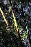 Bamboo & Oak