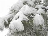 DSC03828 snow.jpg