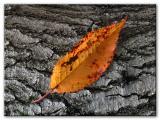 orange-leaf