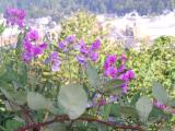 Flowers - Shelton in background