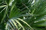 02-Palm-Leaves3.jpg