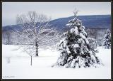 WinterWonder.2228
