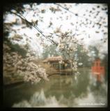 4.8 japanese idyll