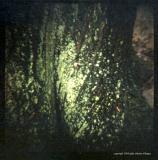 4.8 lichen
