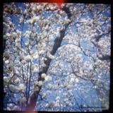 4.14b magnolia diagonal