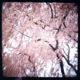4.24 utter pinkness