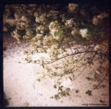 5.25 spring snow too