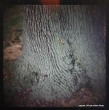 9.1 treetrunk fingerprint