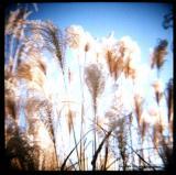 12.3 weeds