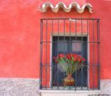 flowers red wall, antigua, guatemala