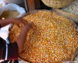 playing the corn, antigua, guatemala