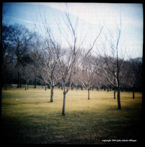 3.11 cherry trees