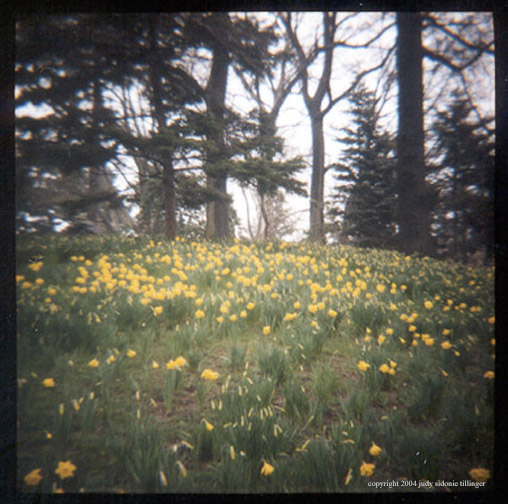 4.8 daffs in patches