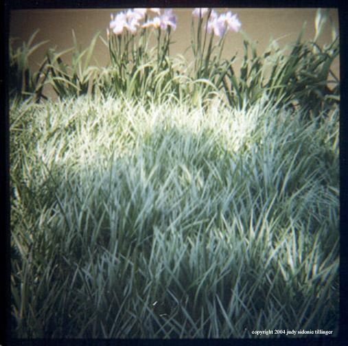 6.2 pond grasses