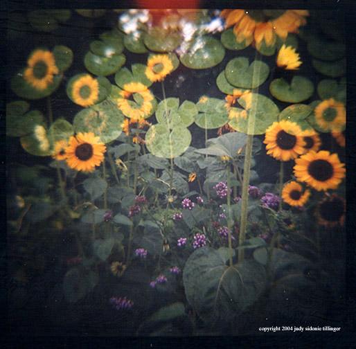 8.13 lilies+sunflowers