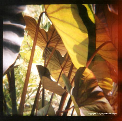9.2 bright leafs