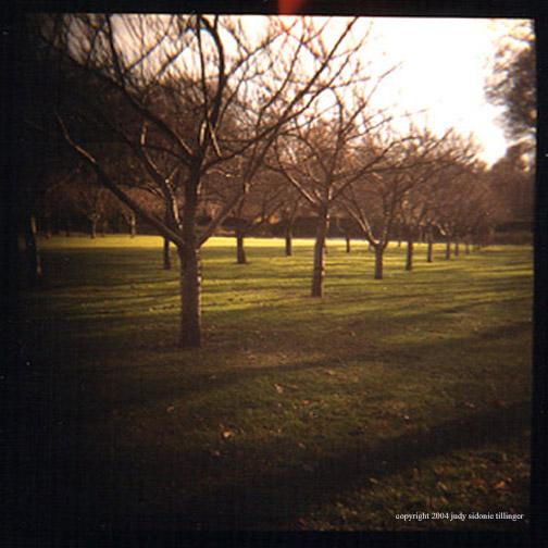 12.3 naked trees cherry