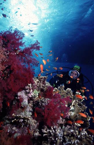 Recife de Coral e Helô