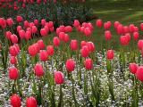 Niagara Flowers1