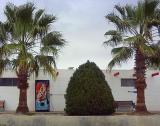 Palms & Pop Machine